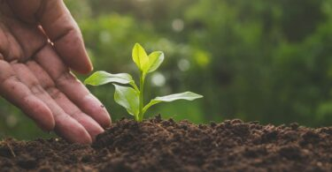 agricoltura biodinamica